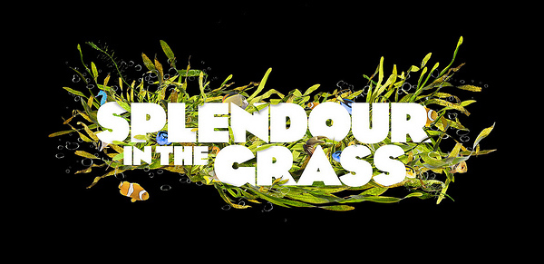 Museyon's Guide To…Splendour in the Grass